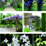 19 meilleures plantes de pergola