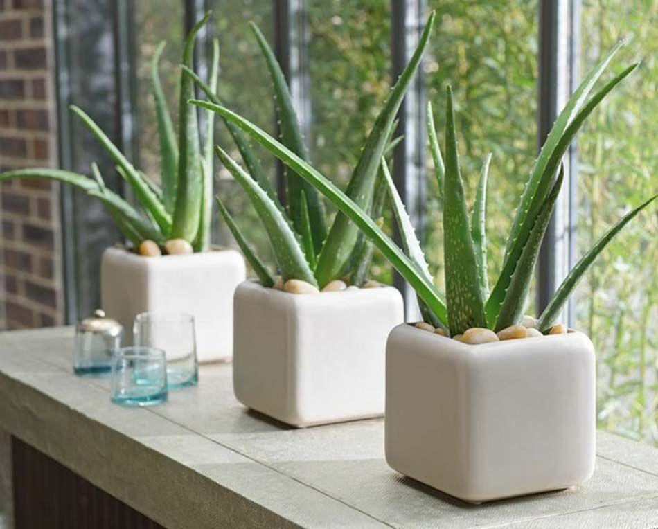 6 meilleures plantes pour les appartements