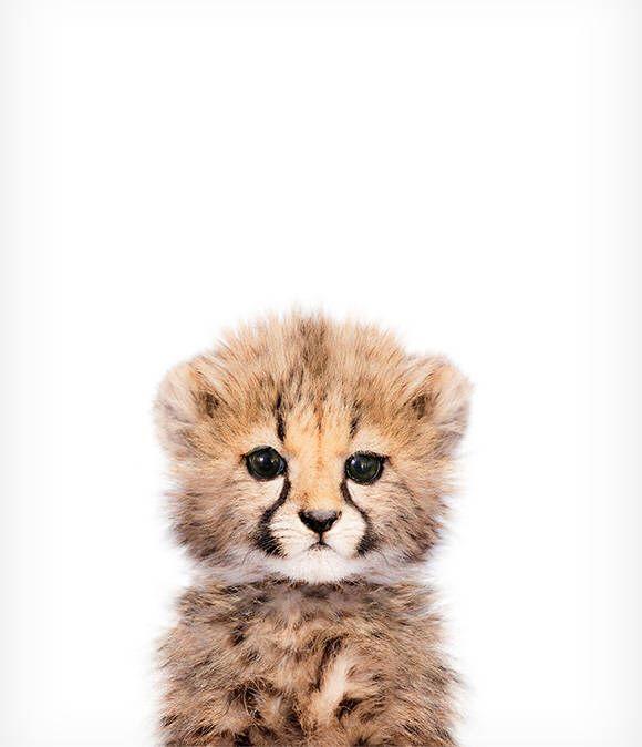 Copie de guépard bébé, Art de pépinière Safari, Art mural pour bébé animal, La couronne