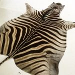Zebra Hide Rug - Foard